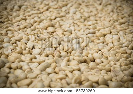 Unroasted Coffee Bean