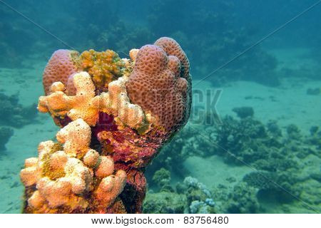 Coral Reef With Sea Sponge In Tropical Sea
