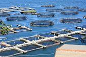 marine open water fish farm in La Spezia Italy poster