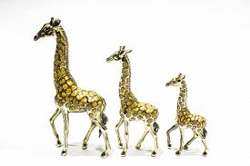 ROW OF GIRAFFES
