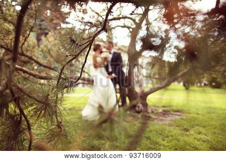 Sihouettes Of A Bride And Groom Sitting In A Tree