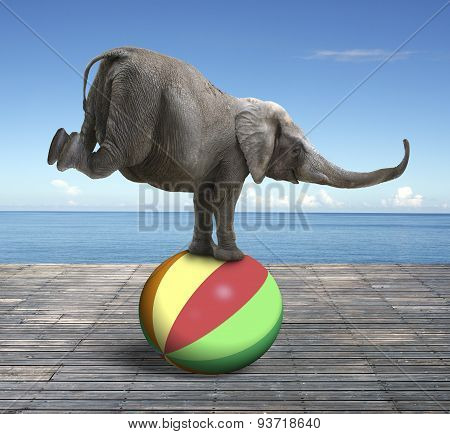Elephant Balancing On A Colorful Ball
