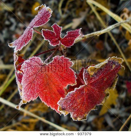 Redfrost_10