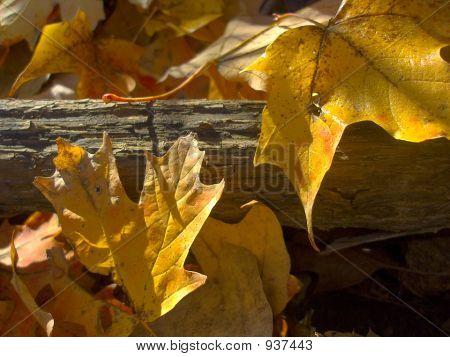 Yellowfrost_1