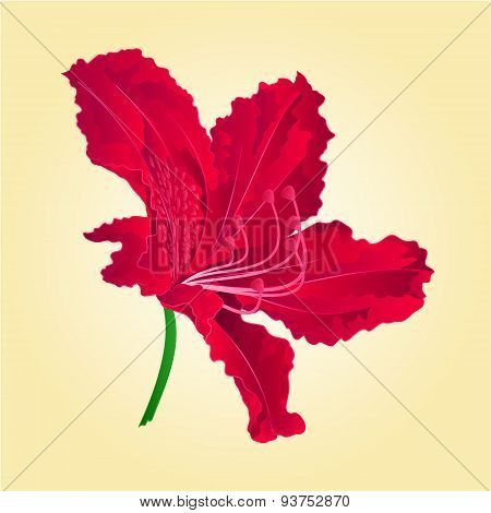Flower Red Rhododenrodon Vector