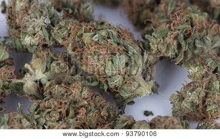 Macro of Medicinal Marijuana