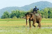 BUON ME THUOT- VIET NAM- JUNE 11: Asia travel in summer vacation at beautiful Vietnamese countryside traveler travelling by ride elephant in eco tour green landscape of rural Vietnam June 11 2015 poster