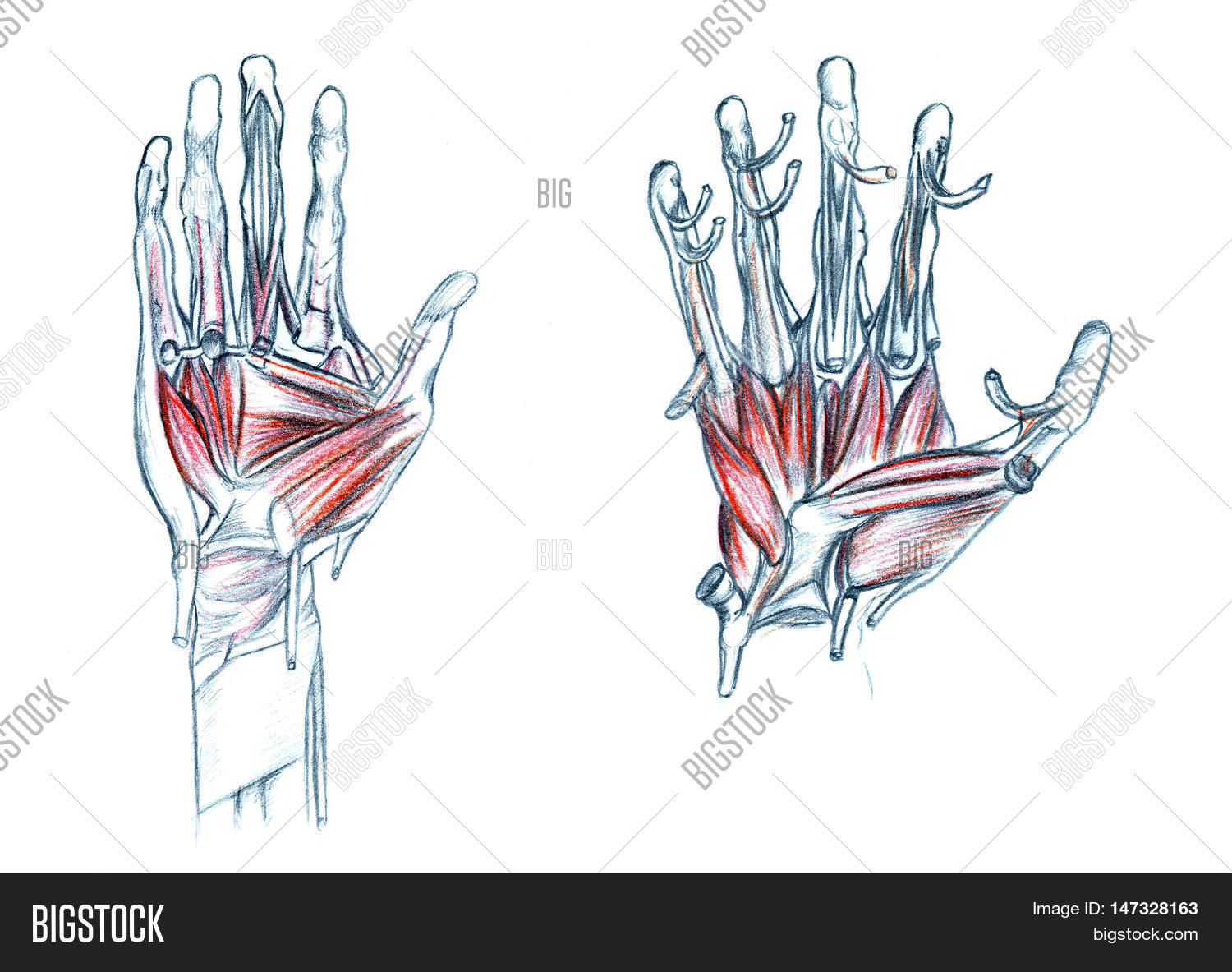 Hand Drawn Medical Image Photo Free Trial Bigstock