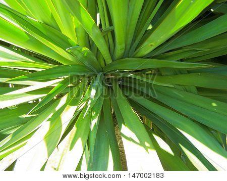 Gree plant - in a public garde (summer)