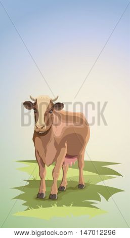 Cute cow standing on grass. Cow on green pastures
