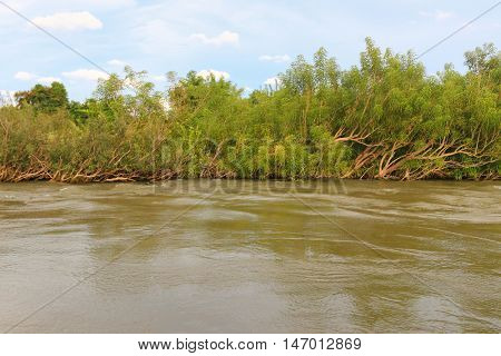 Slanting trees bend over along water caused by strong wind and flow of Mekong river in Laos
