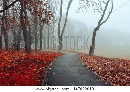 Autumn landscape -foggy autumn view in cold tones.Autumn park alley in dense fog- foggy autumn landscape of lonely alley with bare autumn trees and orange fallen leaves. Landscape view of autumn alley in dense autumn fog.