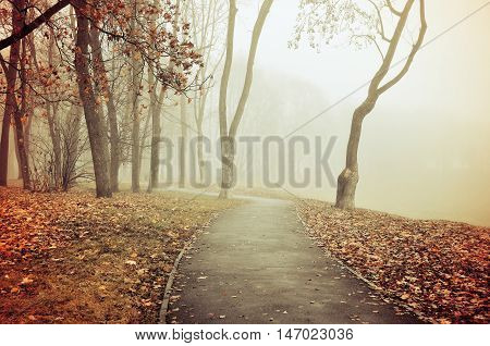 Autumn view of misty park autumn nature. Autumn park alley in dense fog - foggy autumn landscape with bare autumn trees and orange fallen leaves. Autumn alley in dense autumn fog. Retro tones applied.