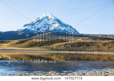 Sajama Volcano And Lake Huayñacota. Andean Bolivia