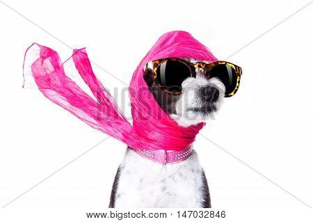 chic fashionable diva luxury cool dog with funny sunglasses scarf and necklace isolated on white background poster