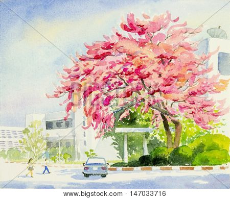 Watercolor landscape original painting colorful of wild himalayan cherry in cmu.univesity and emotion in blue background