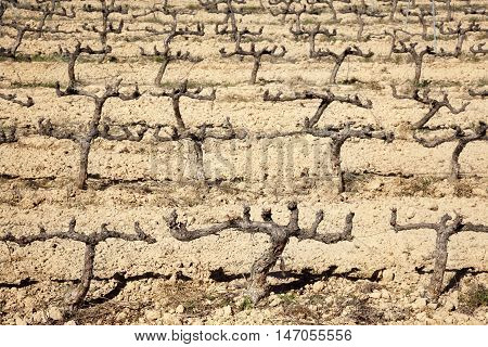 Vineyards in Teruel Province in dry time