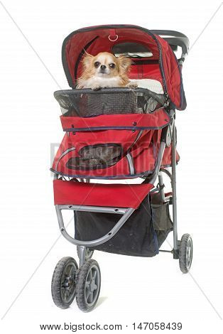 dog in pushchair in front of white background