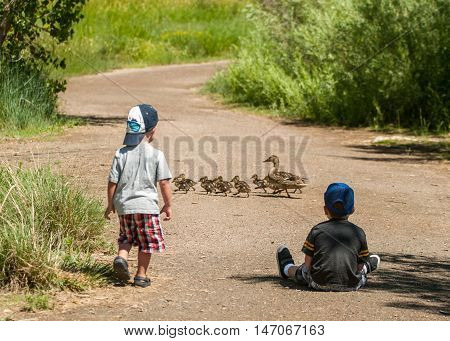 Two boys watching a family of ducks crossing the road