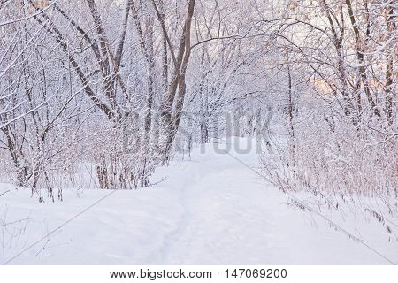 Snowy Path Through The Trees In Forest