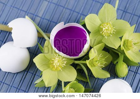 Easter decoration with egg shell with magenta tempera paint in and hellebore