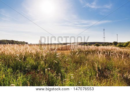 Natural autumn rural background - the grain combine reaps a crop from a field. Combine harvester that is harvesting wheat with dust straw in the air. Russia.