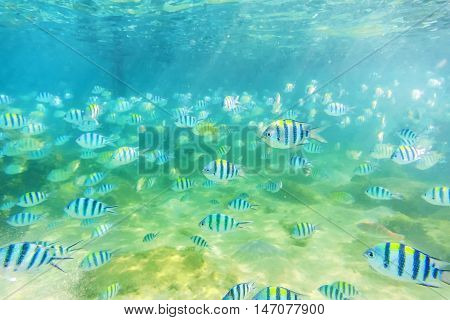 Under water Sea fish at shallow Seabed