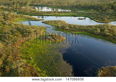 Swamp birches pines and blue water. Evening sunlight in bog. Reflection of marsh trees. Fen lakes forest. Moor in summer evening. Slough natural environment. Endla Nature Reserve Estonia Europe