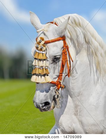 grey andalusian horse stallion in spanish decoration