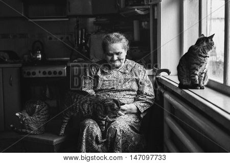 An elderly woman sitting near the window and looks at the cat in her hands