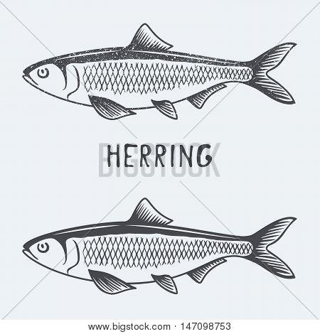 herring fish vector illustration black an white