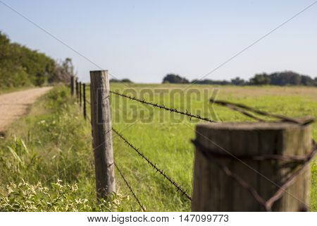 Barb wire fence along country back road.