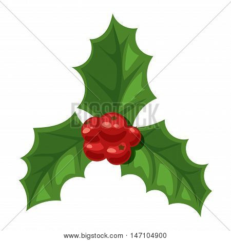 European christmas berry holly ilex aquifolium leaves and fruit. Floral branch red xmas winter decor christmas berry symbol. Vector decorative holly christmas berry leaf traditional ornament symbol.