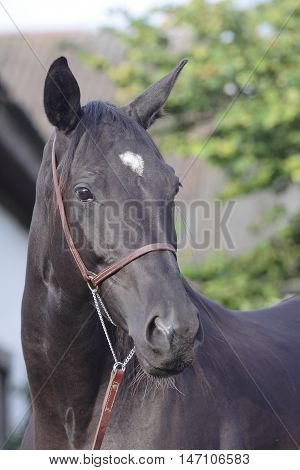 black horse portrait on a green background