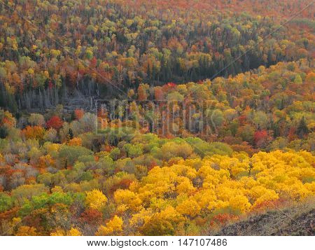 Glorious autumn color of a dense forest as seen from a mountain top in the upper peninsula of Michigan