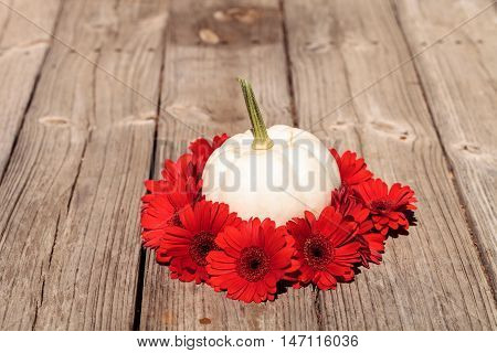 Red gerbera daisies ring a carved white Casper pumpkin on a rustic wood table at the holidays.
