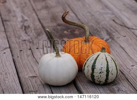 White Casper pumpkin next to an orange pumpkin and green and white gourd on a rustic wood picnic table in fall.