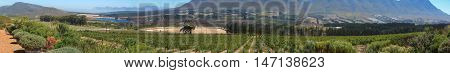 Wine farm panoramic view of Hemel en Aarde wine route South Africa