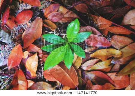 Top view, beginning  growth green plants emerge from dead dried leaves, concept of new development or new life and hope, never give up from obstacle