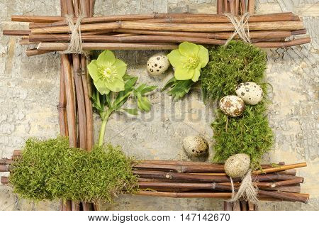Easter frame with vintage background and five boiled quail eggs plus two hellebore flowers