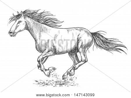 Running horse pencil sketch portrait. White mustang stallion rushing with gallop gait