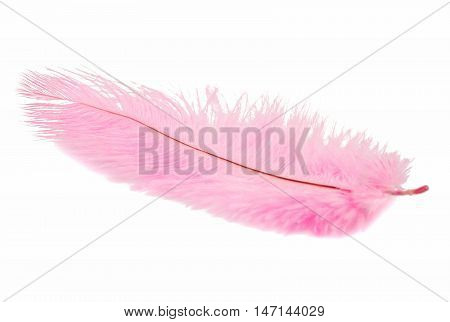 Pink feather decoration on a white background