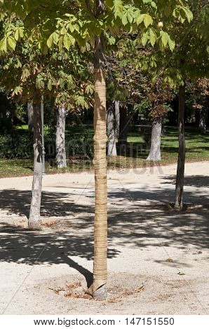 Geotextile bandage for the protection of ornamental trees