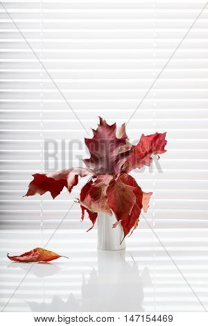 Interior composition of red dried oak leaves in vase over white jalousie background