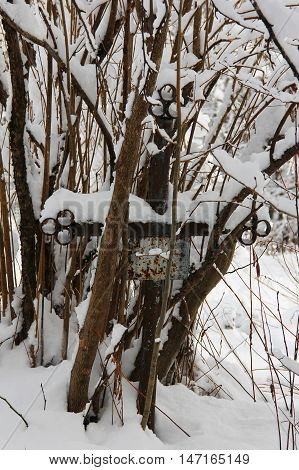 old neglected grave with iron cross overgrown with trees and bushes covered with snow