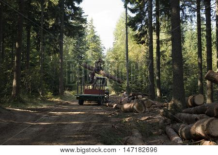 Log loader in the woods with bunch of logs.