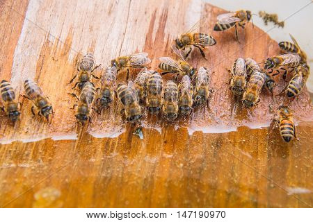 Bees Drinking Water At The Summer.