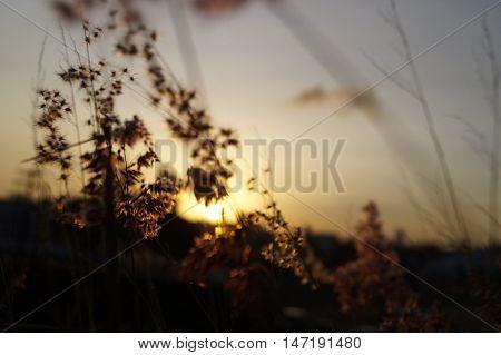Por-do-sol visto através de flores e céu azul
