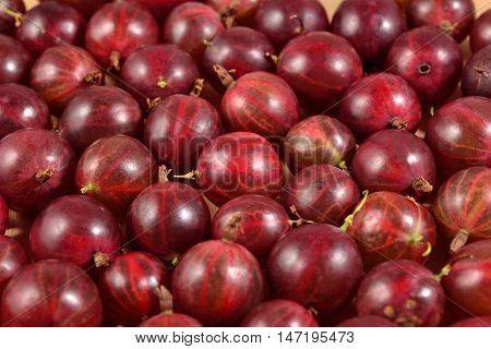 Fresh Red Gooseberry Close Up As Background