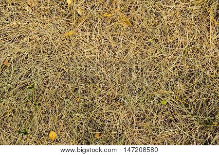 Grass, colors of fall, dry grass, photo grass, dried grass, autumn, autumn texture, autumn pattern, photo of dried grass, yellow, yellow grass, autumn background, hay, autumn time, september, fall background, natural background, nature at fall, grass text